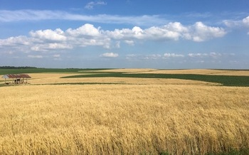 Small grains such as barley and rye help reduce nutrient runoff on farms. (Halee Wepking/Meadowlark Farm)