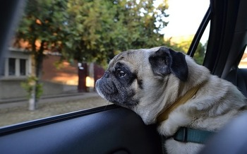 Many people believe if they just pop into the store, the dog will be fine, but even on a 78-degree day, the temperature inside a parked car can reach 100 degrees in just minutes. (Max Pixel)