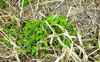 Cover crops could help prevent fallow syndrome, which can decrease crop yield. (U.S. Department of Agriculture/Flickr)