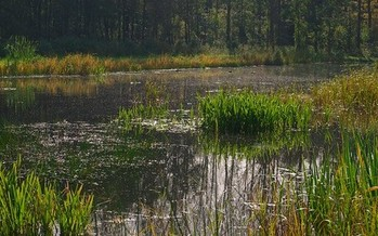 Wetlands provide filtration to maintain clean water. (Rob Oo/Flickr)