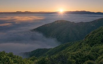 A proposed change to federal environmental policy could fast-track logging on public lands in areas such as the Los Padres National Forest. (Mason Cummings/The Wilderness Society)