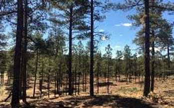 The Apache-Sitgreaves National Forest, which covers about 2 million acres in east central Arkansas, is one of six national forests in the state. (U.S. Forest Service)