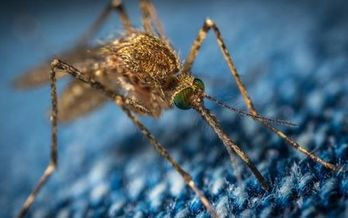Missouri DHSS updates its West Nile virus data through the end of October, even in years like this one when infections have been considered