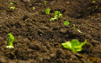 Scientists say regenerative farming practices that don't use synthetic fertilizers or chemical pesticides can help capture more carbon from the atmosphere and create healthier soil for crops. (Pixabay)