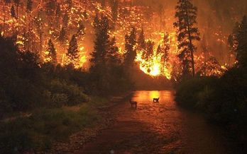 Signs suggesting a changing climate in Colorado include over 475,000 acres consumed by wildfires in 2018. The U.S. Drought Monitor recently reported that 70% of the state is considered �abnormally dry.� (BLM/Wikimedia Commons)