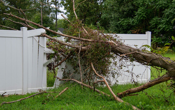 Storm damaged trees can create potentially dangerous situations for homeowners and neighbors. (Adobe Stock)