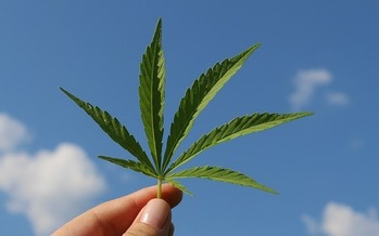 In Wisconsin, hemp growers must develop a research plan, sign a research agreement, meet reporting and record-keeping requirements, and pay to have their crops sampled for THC levels, to participate in the state's hemp pilot research program. (Pixabay)