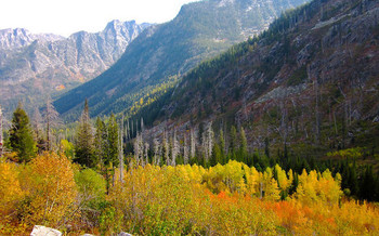 A 40,000-acre logging project has been approved in the Payette National Forest. (Keith Lannom/U.S. Forest Service)