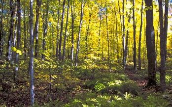 Hiawatha National Forest has 8,000 inventoried roadless acres. (Bob Nichols/USDA)