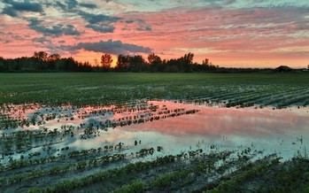 Ohio's farmers were challenged by an unusually wet spring. (Christian Collins/Flickr)