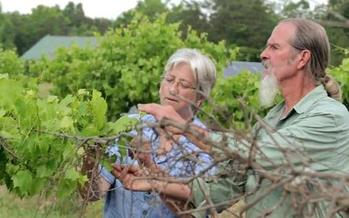 Researcher Laura Lengnick, left, says warmer winters followed by late freezes are impacting fruit crops such as grapes. (Lengnick)