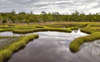 Wetlands are critical to North Carolina's coastal ecosystems. (Adobe Stock)
