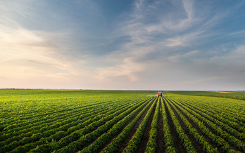 Last year, China bought nearly 264,000 tons of soybeans from farmers in the United States, according to the U.S. Department of Agriculture. (Adobe Stock)