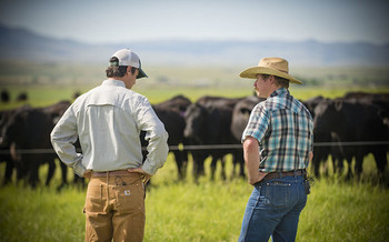 Some cattle producers want the federal government to restore country-of-origin labeling to help their long-term economic prospects. (USDA NRCS Montana/Flickr)