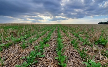 Supporters of conservation practices, such as cover crops, are hoping to convince more farmers to incorporate them into their operations as market challenges persist. (Adobe Stock)