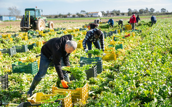 The COVID pandemic has raised public awareness of the essential role that undocumented workers play in the U.S. agricultural industry. (JackF/Adobe Stock)