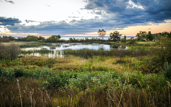 A single acre of wetland can store up to 1.5 million gallons of floodwater. (ehrlif/Adobe Stock)