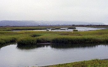 The Tijuana River Estuarine Research Reserve offers midday online programs on a different topic every Tuesday. (Osbomb/Flickr)