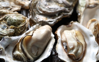 Restaurant shutdowns during the COVID-19 pandemic have impacted the Chesapeake Bay oyster industry as well as local communities dependent on fishing and tourism. (Adobe Stock)