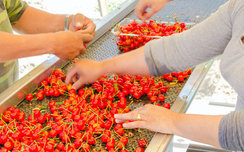 COVID-19 cases have surged in Yakima County among farmworkers. (trongnguyen/Adobe Stock)