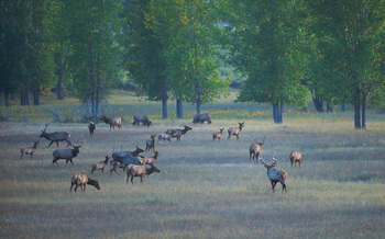 American Prairie Reserve is holding an online drawing for elk hunting on one of its deeded properties this fall. (Gib Myers/APR)