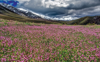 Wildflowers bloom in the valley of the Tobin Range Wilderness Study Area, which would become the Grandfathers' Wilderness after the bill is signed into law. (Kurt Kuznick)