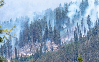 Montana's new climate-change report addresses the health impacts of global warming, including poor air quality from more wildfire smoke. (Adobe Stock)