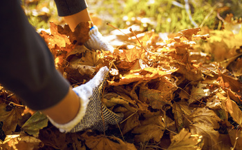 Allowing leaves to decompose naturally produces leaf mold, which improves soil structure and water retention. (maxbelchenko/Adobe Stock)