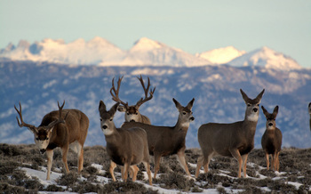 A 2019 poll by the National Wildlife Federation found nearly 85% of respondents in New Mexico said they'd like to see increased efforts to safeguard wildlife corridors. (dog.gov)