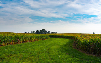 Illinois farmers are experiencing rainier springs and drier summers because of the changing climate. (EJRodriquez/Adobe Stock)