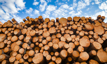Most of the wood harvested in the United States is exported to Southeast Asia for furniture manufacturing. (Adobe Stock)