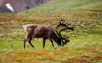 Animals can contract Chronic Wasting Disease through prions, which persist long after an infected animal dies by eating plants in contaminated areas. (PXhere)