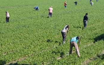 A new report looking at federal investigations of wage and hourly standards on U.S. farms shows most cases result in violations. It says the pace of investigations is slowing, potentially leaving more migrant workers vulnerable. (Adobe Stock)