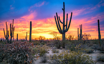 Sunset brings out the brilliant colors of the Arizona desert at Saguaro National Park near Tucson, part of the millions of acres of public lands across the state. (Nate Hovee/Adobe Stock)<br />