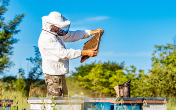 In the 2019-2020 winter, Massachusetts beekeepers reported a 47% drop in colony numbers. (Vadim/Adobe Stock)