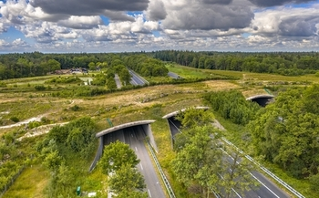 Conservation groups say land bridges can help migrating wildlife by preventing collisions between animals and vehicles on highways and rail lines. (creativenature/Adobe Stock)