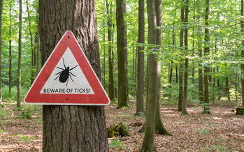 To prevent tick-borne disease, Missouri officials recommend walking in the center of a trail, wearing light colors, long pants and sleeves, and using insect repellent, among other measures. (gabort/Adobe Stock)