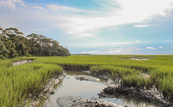 Salt marshes have disappeared over the past two decades along the Eastern Seaboard and other coastlines because of development, polluted runoff and rising seas. (Adobe Stock)