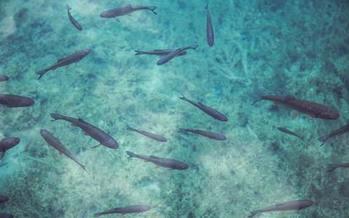 Forage fish are small, nutrient-rich species that serve as food for predators like saltwater fish, sharks, coastal birds and marine mammals. (Pexels/Milada Vigerova)