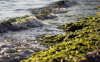 Florida's Blue-Green Algae Task Force outlined in 2019,