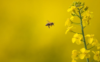 Maine's ban on neonicotinoids prevents both private consumers and licensed applicators from using the pesticide. (lightpoet/Adobe Stock)