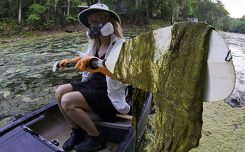 Lesley Gamble paddles through green slime outbreak on the Santa Fe River on May 22, 2012. Photo by John Moran.