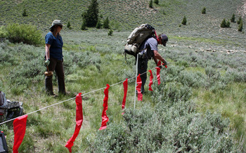 PHOTO: Turbo fladry (portable electric flag fencing) being set up. Photo credit: Deborah Smith