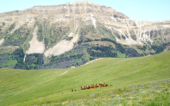 PHOTO: Elk graze along the Snowcrest Range on the Beaverhead-Deerlodge National Forest. Photo credit: Zack Porter