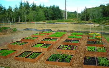 PHOTO: The garden at CCA Food Bank of Clatsop County. Photo courtesy of CCA Food Bank of Clatsop County.