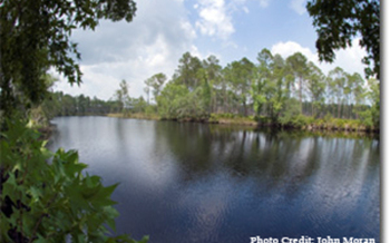 PHOTO: Tates Hell State Forest, a Florida Forever project.