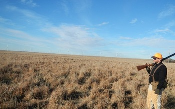 Photo: Pheasant hunting outside of Haxtun, CO near the Xcel wind power plant. Courtesy Lew Carpenter, NWF.