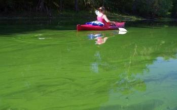 Photo: Santa Fe river slime outbreak, May 2012. Courtesy: Merrillee Malwitz-Jipson photo.<br />