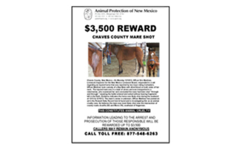 Reward Poster showing Bay mare who was shot.<br />Poster and Photos Credit: Animal Protection of New Mexico and the New Mexico Livestock Board.<br />
