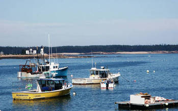 PHOTO: A new report says lobster fisheries in the Gulf of Maine might be the